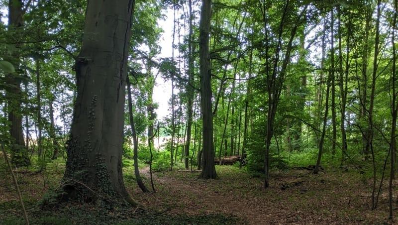 Vielfältiger Baumbestand im FriedWald Dormagen, Foto: FriedWald