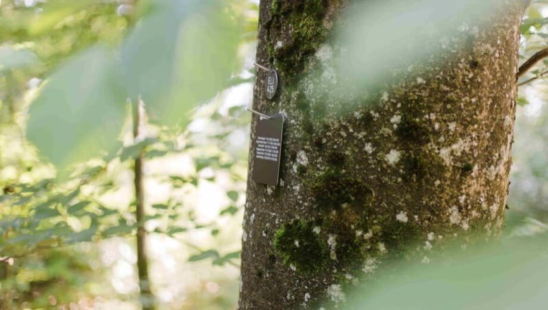 Namenstafel im FriedWald Elisenruhe, Foto: FriedWald