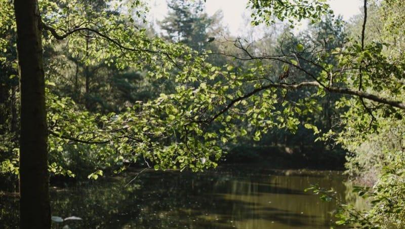 Teich im FriedWald Hasbruch, Foto: FriedWald