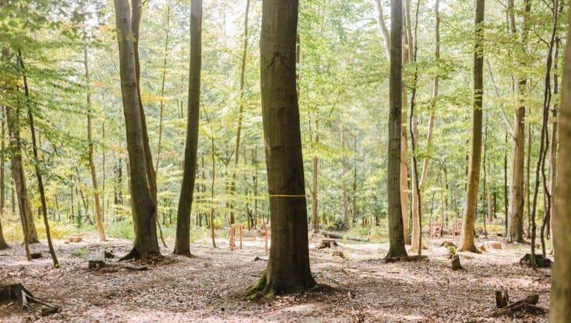 Baum für Bestattungen im FriedWald Planitzwald, Foto: FriedWald
