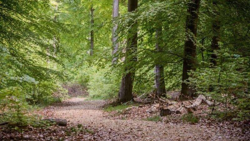 Ein Weg im FriedWald Hirschwiese in Taunusstein, Foto: FriedWald